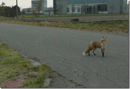 fox2610