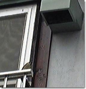 スズメの巣0626-2.jpg