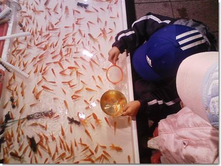 金魚すくい2.jpg