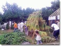 稲刈り~乾燥.jpg