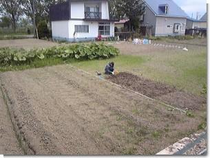 家庭菜園0528.JPG