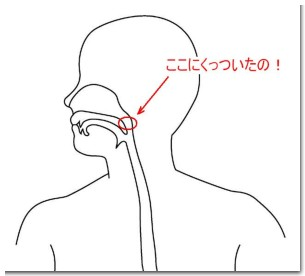 喉断面図A.JPG