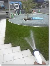 芝の水やり.jpg